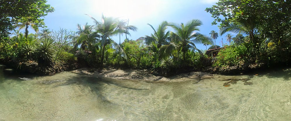 Palmen am Wasser